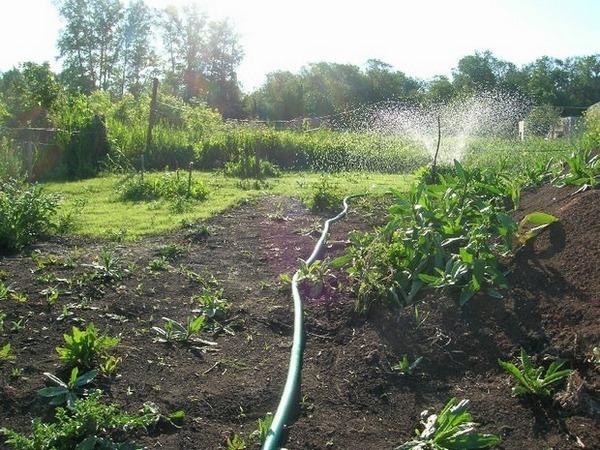 полив огорода с помощью пластиковых труб