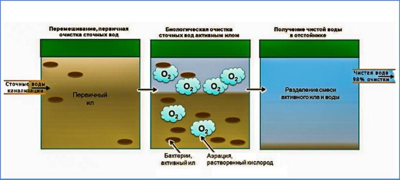 как работают аэробные бактерии